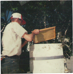 grandfather surratt working bees in his yard